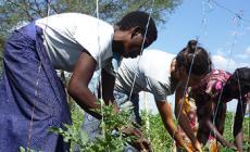 Agriculteurs solidaires : un engagement fort